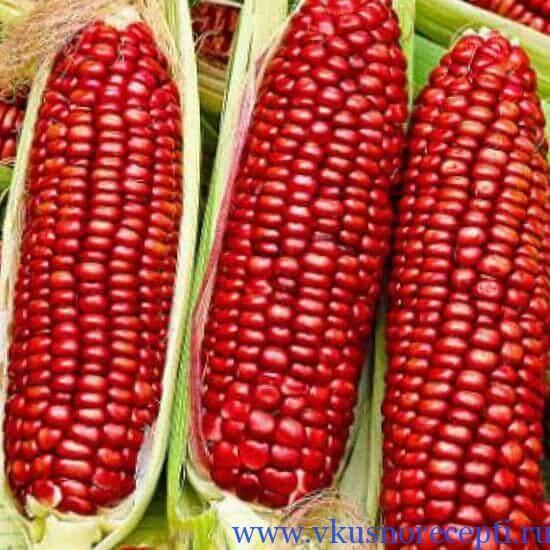 сорта кукурузы для варки